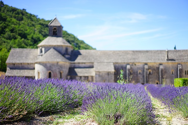 Lavender Tour Private driver